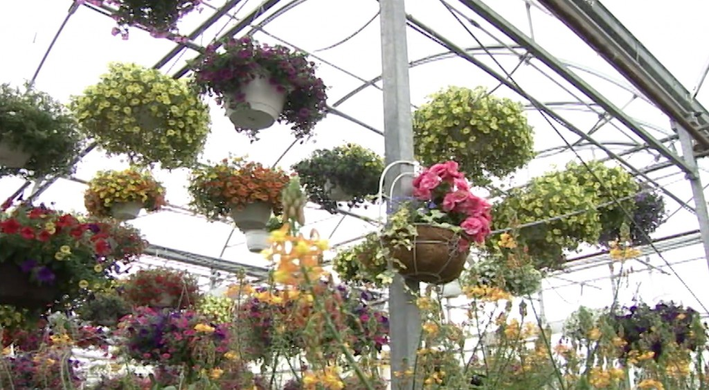Fitkins Greenhouse Virtual Field Trip 1